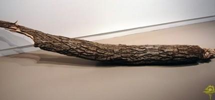 神奇的木頭雕刻