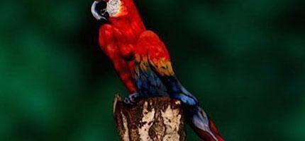 你能看出來這隻鸚鵡到底是什麼嗎?我看了1分鐘都還看不出來!太驚人了!