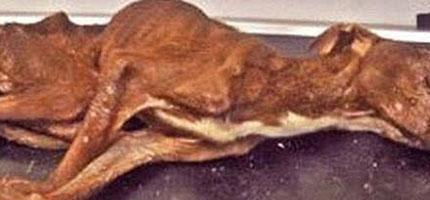 這隻受虐待又快被餓死的狗被丟下22層樓高的垃圾滑槽。接下來,奇蹟發生了。