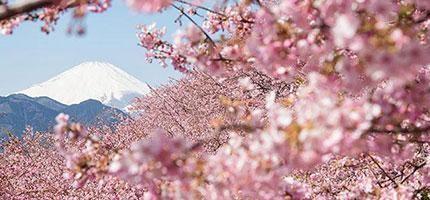 21張2014年最令人陶醉的日本櫻花照片。我現在要馬上買機票去日本!