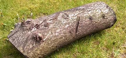 如果你在森林中看到這塊木頭,一定要多看一眼,因為它真的太酷了!