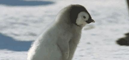 沒有人想到小企鵝可以這麼危險...這17隻的可愛指數已經高到足以致命!