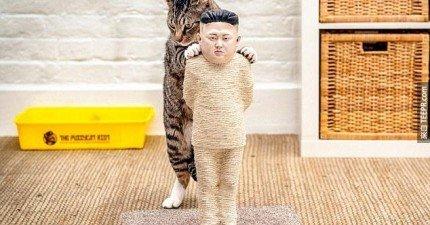 這些貓咪用品代表的就是網路人權。連「金正恩」都躲不過喵正義。