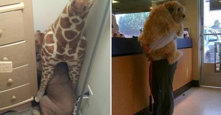 17隻動物遇到獸醫時,他們的反應讓我慚愧地笑出來了。
