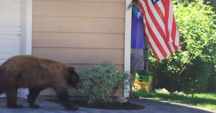 一頭熊只是悠哉地散步但在轉角巧遇一匹人類時,雙方都給嚇壞了!