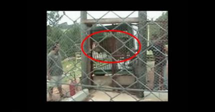 看著這隻已經被關在小籠子裡13年的可憐獅子第一次接觸到草地,這景象讓人既感動又心碎!