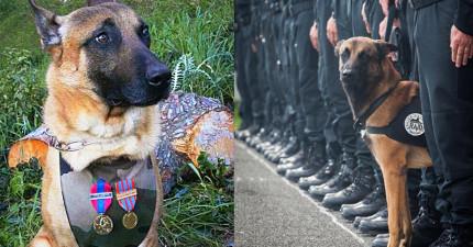 俄國政府為了悼念法國恐怖攻擊中死去的英勇警犬,送上了最可愛的禮物萌翻全世界!