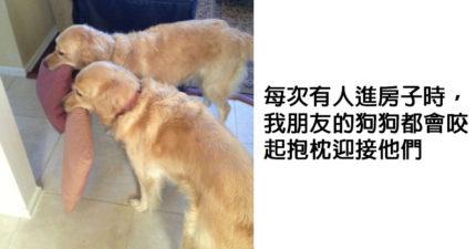 29張證明蠢萌的不只有哈士奇「狗狗都是戲精」可愛爆笑照。#17 對付奧客的最好辦法!