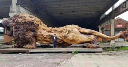 花了22位雕刻師花3年做出的「世界最大樟木神獅」,正面看絕對會讓「獅子王辛巴」漏尿!