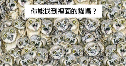 傳聞只有IQ超過140的人才能在1分鐘內找到「圖中的貓」,找不到就...