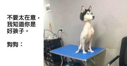 21張證明狗狗可以降低厭世感「狗狗是人類的快樂來源」爆笑圖