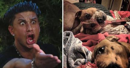 超難懂的「正常狗不正常照」讓網友再度陷入混亂...