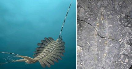最古老「5億年前海怪化石」被挖出!專家:「人類進化秘密」的關鍵