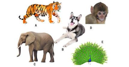 5種動物選最後放棄的...來看看你淺在意識「最在乎什麼東西」