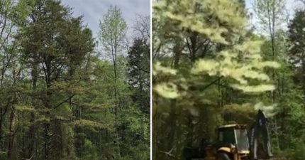 無辜綠樹一撞竟衝出「一大團花粉」 專:這就是過敏的原因