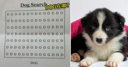 你能從這個看似簡單的圈字遊戲中找到「DOG」嗎?小編直接投降看答案了QQ