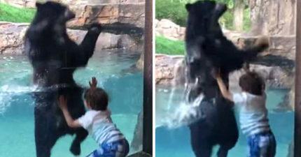 影/動物園黑熊兩腿站直直 學小男孩跳上跳下:我跳得比你高~
