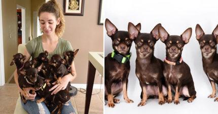 狗狗離開主人崩潰 拿基因複製50隻「還出現世界最小吉娃娃」