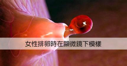 根本像異世界!16個人體器官「顯微鏡下超獵奇模樣」 女生排卵好像火山爆發~