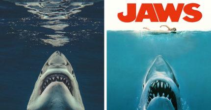 攝影師水下驚險重現《大白鯊》經典場景 當年海報「真實上演」嚇歪網友!
