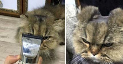 奴才幫貓皇剃毛意外「嚕出高速公路」 網友看完「補救照」笑翻:下輩子小心點!