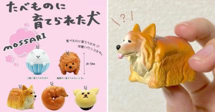 萌感爆表「被食物養大的狗狗」上市 柯基從吐司冒出「半狗半食」模樣超治癒❤️️