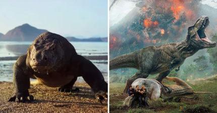 他提議把「科摩多龍」基因改造 推「巨獸島」吸遊客朝聖…網嚇壞:真實侏羅紀世界?