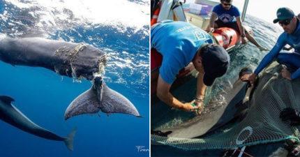 鯨魚寶寶「尾巴斷掉」超緊張 專家搶救卻目睹「最心碎畫面」網:又是人類害的!