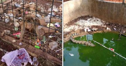 網友公開「世界最噁動物園」的心碎真相 食物「全臭酸」發言人卻堅持:遊客弄的!