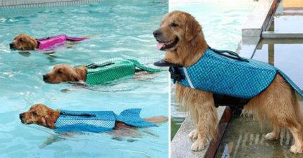 毛小孩專用「旱鴨子→美人魚」創意泳衣 貼心設計「不安全就退費」網友搶翻!