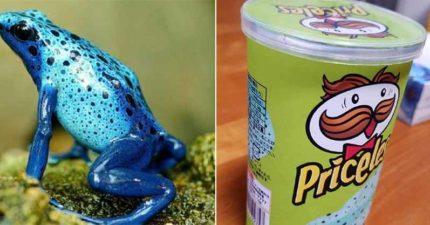 新款「藍色洋芋片」上市!驚人外貌「太像青蛙」網友不敢下手:口味無法想像