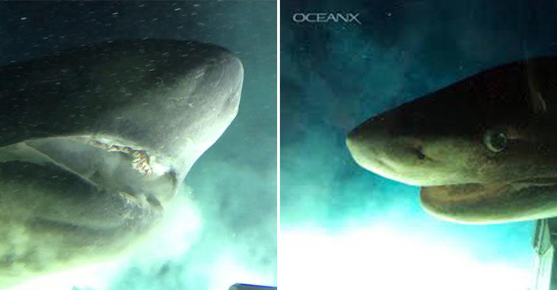 影/深海驚見「史前巨鯊」比潛艇還大 真實版《巨齒鯊》上演…差點吃掉人!