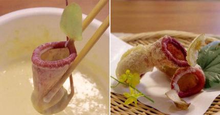 日推最新下酒菜「豬籠草天婦羅」外觀超獵奇 塞滿白米「拿去蒸」也好吃!