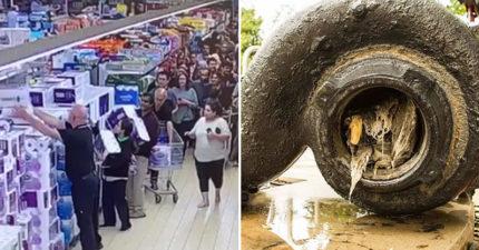 澳洲「下水道塞滿垃圾」嚴重堵塞 曝光「可惡真相」竟是因:搶不到衛生紙!