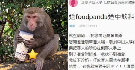 外送珍奶慘被「猴子打劫」!她無奈「2杯都被搶」客服荒謬回:有拍到照嗎?