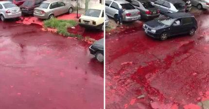 阿根廷街道被「50萬公升鮮血」變恐怖血海 居民嚇傻:是罐子破掉