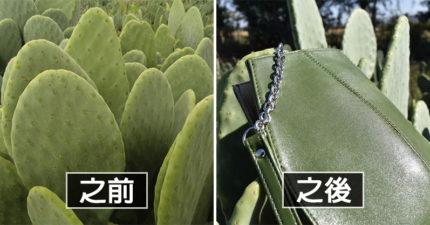 環保兄弟「用仙人掌」做出超耐用皮革:再也沒有動物會受害!