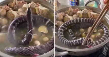 影/食客把小蛇「丟下鍋活煮」 還用「筷子強壓」網罵成一片!