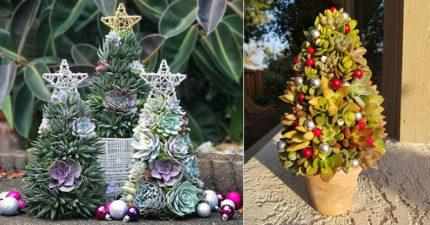 國外爆紅「多肉聖誕樹」今年最吸睛 過完節還可以拆下繼續種!