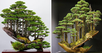 把「整座森林」種在盆栽!日本「盆景魔術師」細節充滿靈魂:庭院變成仙境