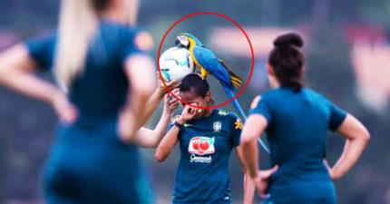 球踢一半「鸚鵡教練空降」:中場休息~隊員嚇爆又覺得超幸福❤