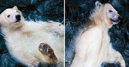 浮力熊「躺水面」chill到爆紅 台灣人看這張腦海都有聲音