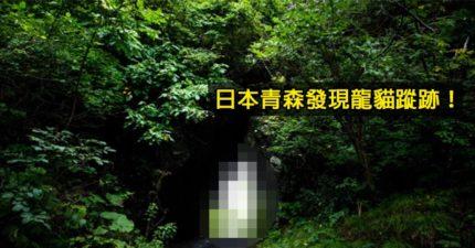 龍貓真身出現了?日本驚見「龍貓本尊」網透露:很隱密不好找