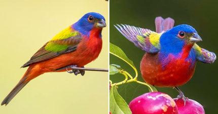 「從彩虹誕生」的明星級仙鳥 「性別一換」直接變灰階影像!