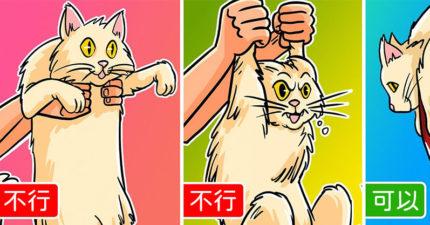 4個讓「貓咪超想被你抱」的獸醫級專業技巧 「最萌抱法」不夠愛不要試