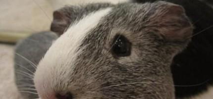 情人節以經過了,但是這14隻小動物還是可以讓你的心中感到滿滿的愛。