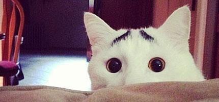 有眉毛的貓咪