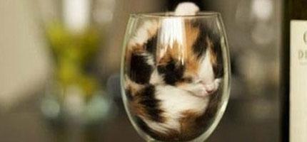 貓咪鑽到杯子裡