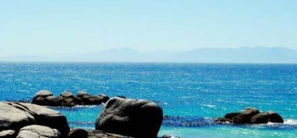 南非的超可愛企鵝群
