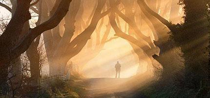 20個你一生一定要走一次的神奇樹隧道。#1看起來很像是PS過的...但不是!